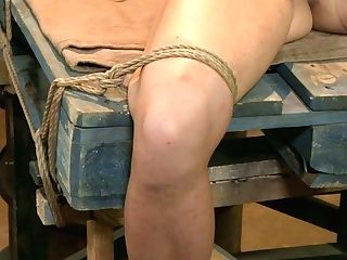 Shibari Dark Haired Lady Bellows With Anguish And Gets Disciplined